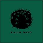 t-shirt-cactus-kaliogayo